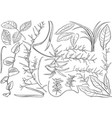 black and white plant leaves vector image vector image