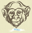 hand drawn portrait of monkey chimpanzee vector image