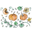 watercolor vegetable pumpkin plant with leaves vector image vector image