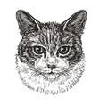 drawn portrait of cute cat animal kitty pet vector image
