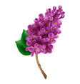 branch blooming lilac isolated vector image vector image