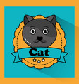 cat pet animal friendly banner vector image