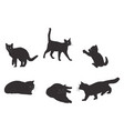 set of cats silhouette vector image