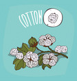 set of isolated plant cotton flowers herb vector image vector image