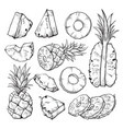 pineapple sketch fresh sliced vector image vector image
