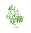 sprigs of fresh delicious rosemary in realistic vector image