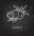 hand drawn tomatoes vector image vector image