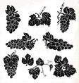 Collection of silhouette grapes leaves and vector image