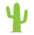 isolated green cactus vector image