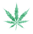 watercolor marijuana leaf isolated on white vector image vector image