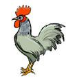 cockerel symbol of sunrise vector image
