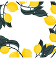 square frame with lemons branches vector image