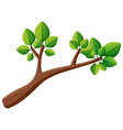 tree branch with green leaves vector image vector image
