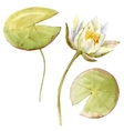 Watercolor lotus flower vector image
