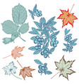 autumn leaves set for design vector image