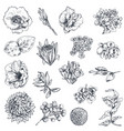 collection hand drawn flowers and plants vector image vector image