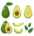 set fresh whole half cut slice and leaves vector image vector image