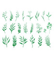 set of herbs and branches vector image