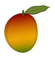 isolated mango vector image