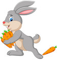 cartoon rabbit carrying carrots vector image vector image
