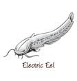 electric eel color vector image