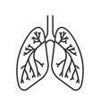 human lungs with bronchi and bronchioles linear vector image vector image