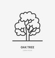 oak tree flat line icon thin sign of park vector image vector image