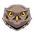 owl head mascot logo vector image