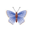 butterfly icon 3d realistic butterfly moth insect vector image vector image