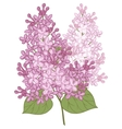 flowers of lilac for your design vector image vector image