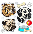 icons colored dog bulldog pug dalmatian vector image