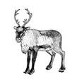hand drawn reindeer sketch vector image vector image