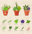 rustic collection of different herbs planted in vector image