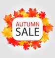 autumn sale banner discount offer with vector image