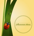 Green grass stem dew drops cute ladybug vector image vector image