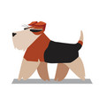 terrier minimalist image vector image