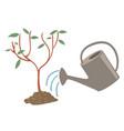 tree watering flat vector image