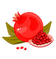 whole and cut pomegranate icon set flat cartoon vector image vector image