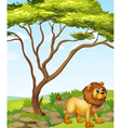 A lion at the right side of a big tree vector image vector image