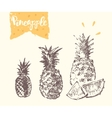 Drawn pineapple sketch vector image