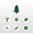 flat icon natural set of baobab leaves rosemary vector image vector image