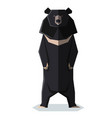flat polygonal asian black bear vector image vector image