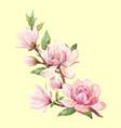 watercolor magnolia floral composition vector image vector image