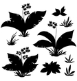 Exotic Plants Flowers and Grass vector image vector image