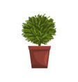 green indoor house plant in brown pot element for vector image