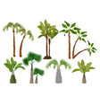 palm trees tropical plants collection garden of vector image