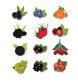 set berries vector image vector image
