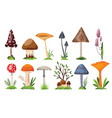 collection mushrooms and toadstools vector image vector image
