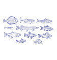 collection of fish hand drawn with blue contour vector image
