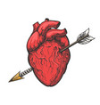 human heart with arrow tattoo etching vector image vector image